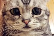 猫工智能:卷积神经网络层的实现